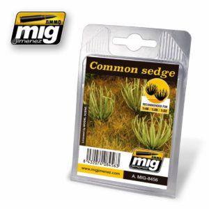 AMMO-Common-Sedge---Gemeine-Segge_0 - bigpandav.de